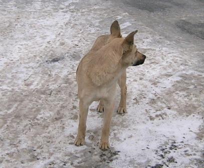 Бродячі собаки на ДВРЗ