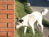 Безпритульні собаки на ДВРЗ