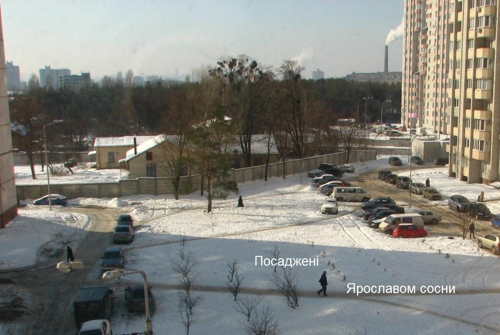 Ярослав посадив сосни, фото сайту Ліски