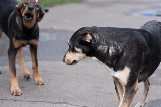 Цих собак та кішок можуть знищити!