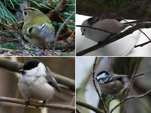 Ще й таких дрібних птахів (див. фото