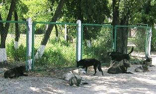 Зграя безпритульних собак