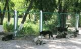 Продовжується стерилізація безпритульних тварин