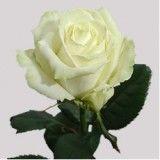 """Магазин """"Квітник"""" - мешканцям ДВРЗ -  висловлюйте почуття мовою квітів!"""
