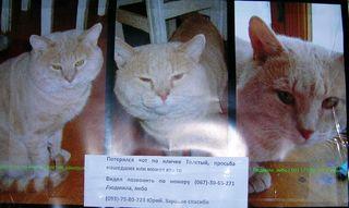 Домашние животные: кошки теряются