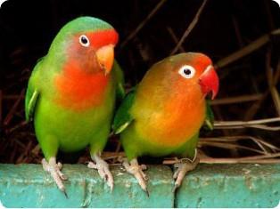 Домашние животные: попугаи улетают, кошки теряются, залезают в автомобили
