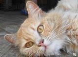 Найден кот в районе ДВРЗ