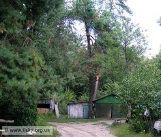 Селище Рибне в лісі біля ДВРЗ