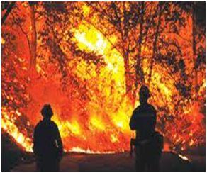 Бережіть ліс від вогню!
