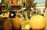 Суботній ярмарок екологічно чистих продуктів