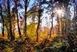 Фото: осінь на ДВРЗ