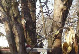 Фото натуралістів Голосківської школи