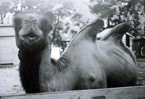 День фотографа в київському зоопарку