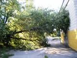 Почему падают деревья?