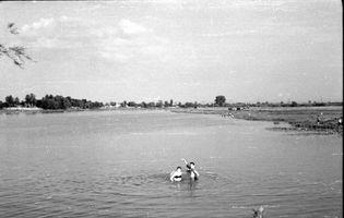 Березняки. Озеро Тельбин