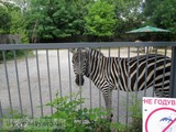 Київський історик - про Київський зоопарк
