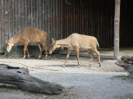 Київський зоопарк