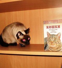 Кошки и книги