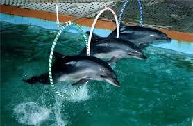 Дельфіни потребують захисту