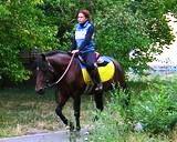 Работа для тех, кто любит лошадей