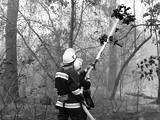 Пожежі в лісах