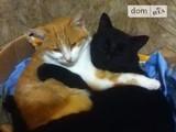 Продается часть дома с двумя котами в придачу