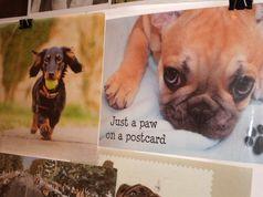 Виставка листівок про собак