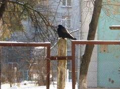 Снежная зима в Киеве
