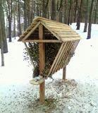 Дарницьке лісопаркове господарство запрошує на прогулянку
