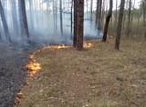 Пожар в лесу возле ДВРЗ