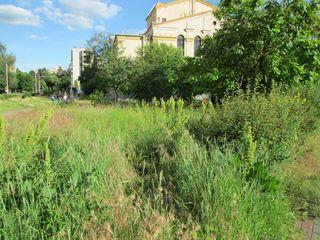 Стан газонів за Будинком культури ДВРЗ