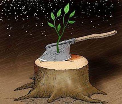 Через 10 лет на Киевщине не станет лесов?