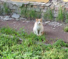 Домашній рудий котик - улюбленець дорослих і дітей