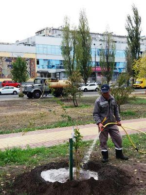 У сквері Миколайчука посадили дерева від Розетки