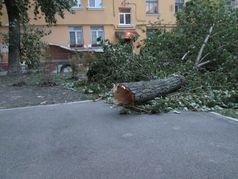 Будьте обережні під деревами!