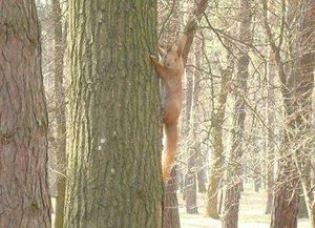 Восени в лісі спокійно