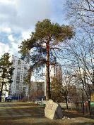 Урочище Волчья гора в Киеве станет парком имени Нестерова?