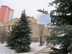Ялинки у парку Сосновому на ДВРЗ