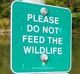 Пожалуйста, не кормите диких животных