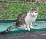 Петиція: визнати вуличних котів частиною екосистеми міста Києва