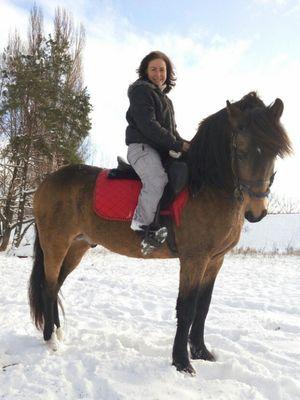 Продажа лошадей в Киеве. Буланый жеребец Лукас 2010 г.р.