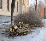 У Києві зрізають сухостій