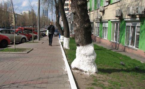 Дерева в Києві більше не білитимуть?