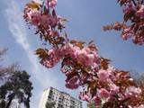 Парк чарівної квітки