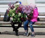 В Киеве цветёт сирень