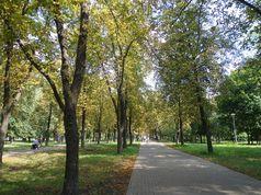 Прощання з літом: прогулянка по лісопарку