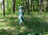 Як зорієнтуватися в лісі по квартальних стовпах