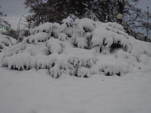 Зимові картинки