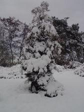 Зимова красуня