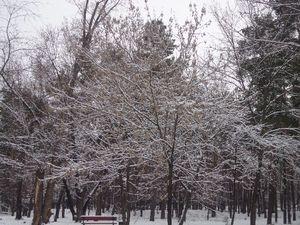 Зимова ніжність